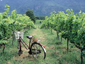 Khao Yai Wine Trails